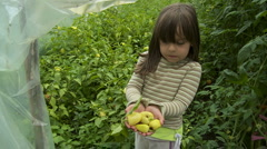 Girl picked peppers in a greenhouse Stock Footage