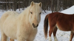 Pony / Ponies In The Snow 01 Stock Footage