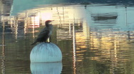 Stock Video Footage of Cormorant sits on a buoy in the middle of  urban river