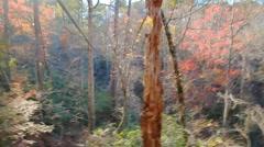 Zipquest Adventure near Fayetteville nc Stock Footage