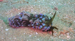 Nudibranch crawling over the seafloor Stock Footage
