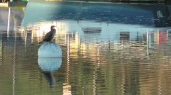Cormorant sitting on a buoy close to boat yard on urban river. Stock Footage