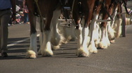 Horses Marching - Martin Luther King Parade - Los Angeles 2011 Stock Footage
