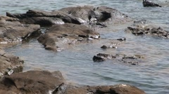 Rocks and Shallow Water Stock Footage