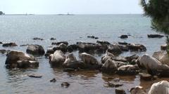 Shallow Sea Rocks Stock Footage