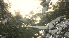 Wind Blowing Winter Snow From Trees Stock Footage