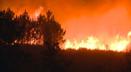Stock Video Footage of Forest fire at night