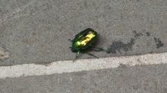 Beetle on Sidewalk Stock Footage