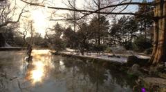 Winter Beauty Scene 07 Stock Footage