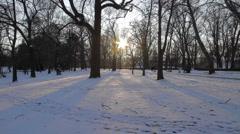 Winter Beauty Scene 28 Stock Footage