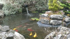 Fish in Garden Pond Stock Footage