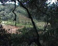 Jungle trekking, view over ricefield - stock footage