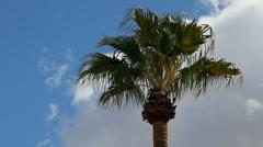 Birds In Palm Tree - stock footage