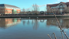 Three Swans swim along river. Modern office blocks on far bank reflected zoom in Stock Footage