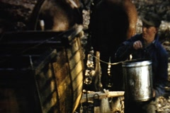 Vintage-emptying maple syrup sap buckets Stock Footage