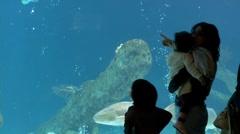 Aquarium 02085O - stock footage