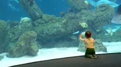 Aquarium 0196VN - stock footage