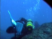 Stock Video Footage of Scuba Diver Damaging Coral Reef GFSD
