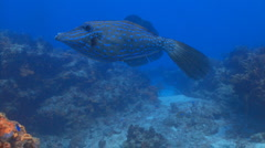filefish tormentos track - stock footage