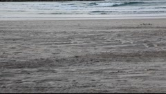 Man woman walk play run with dog on the beach - stock footage