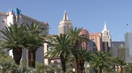 Stock Video Footage of Palm Trees on Las Vegas Strip