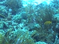 Trunkfish 1 Footage