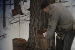 Stock Video Footage of Vintage 8mm -Hanging Sap Buckets