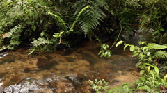Stream flowing through cloudforest - stock footage
