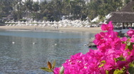 Stock Video Footage of bougainvillea flowers overlooking tropical mexico bay