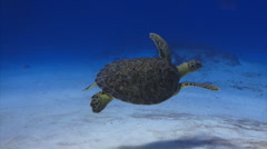 Turtle green ocean marine wildlife Stock Footage