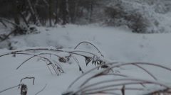 Snow-covered grass - stock footage