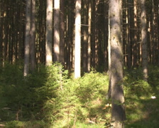 Forest in the Austrian Alps - stock footage