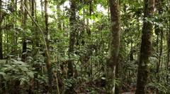 Walking through tropical rainforest Stock Footage