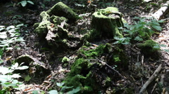 forest background1 - stock footage