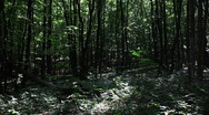 Forest timelapse background1 Stock Footage