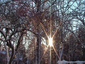 Stock Video Footage of Sunset Through The Trees