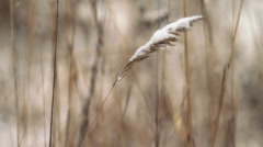 Winter grass. Stock Footage