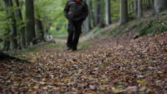 Walk in the forest Stock Footage