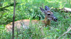 Deer eating in the forest Stock Footage