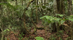 Walking through lianas in rainforest Stock Footage