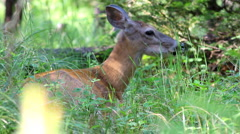 Deer in the forest 3 Stock Footage