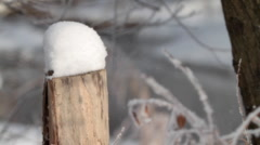 Stub in winter forest - stock footage