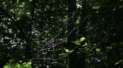 forest trees background215 - stock footage