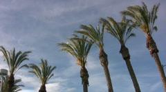 Stock Video Footage of Jittery Palms