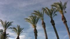 Jittery Palms - stock footage