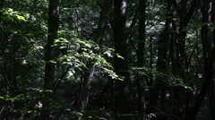 Forest trees breeze background1 Stock Footage