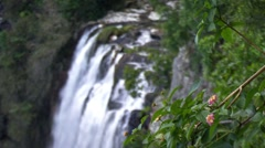 Waterfall with leaves in foreground Stock Footage