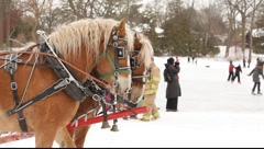 Horse Drawn Sleigh Ride Stock Footage
