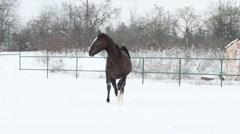 Horses playing in the snow stallions galope equestrian12 Stock Footage