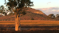 Australian sunset Stock Footage